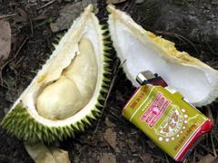 Durian Tengku