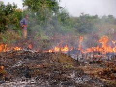 Pembakaran lahan