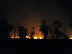 Api yang sedang berpesta