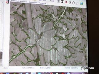 Menghitung luasan daun untuk LAI, misalnya.