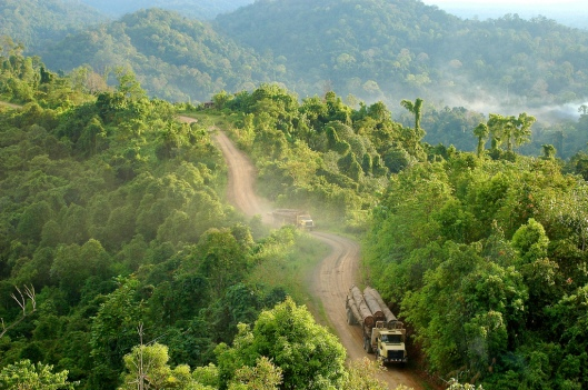 Hutan di Kalimantan Timur. Sumber gambar: goes.msu.edu